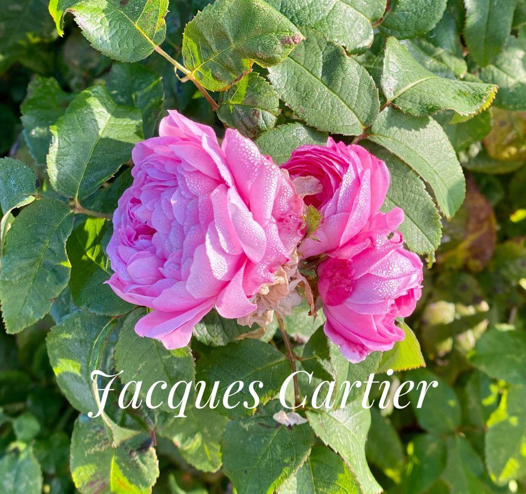 Jacques-Cartier-2
